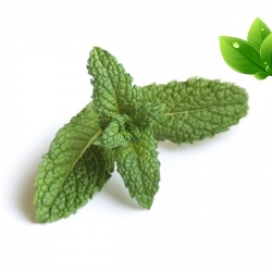 E-liquide Menthe Verte - Alfaliquid